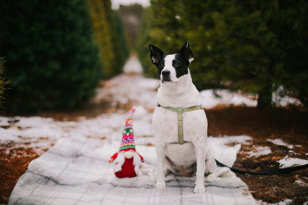 A Wisconsin rescue dog poses for the camera