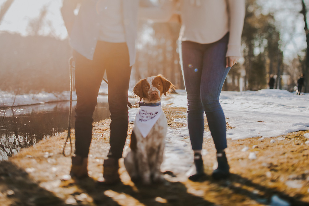 A dog sits between his owners at a Wisconsin engagement session
