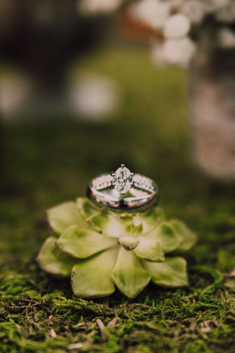 A close up of a diamond ring on a succulent