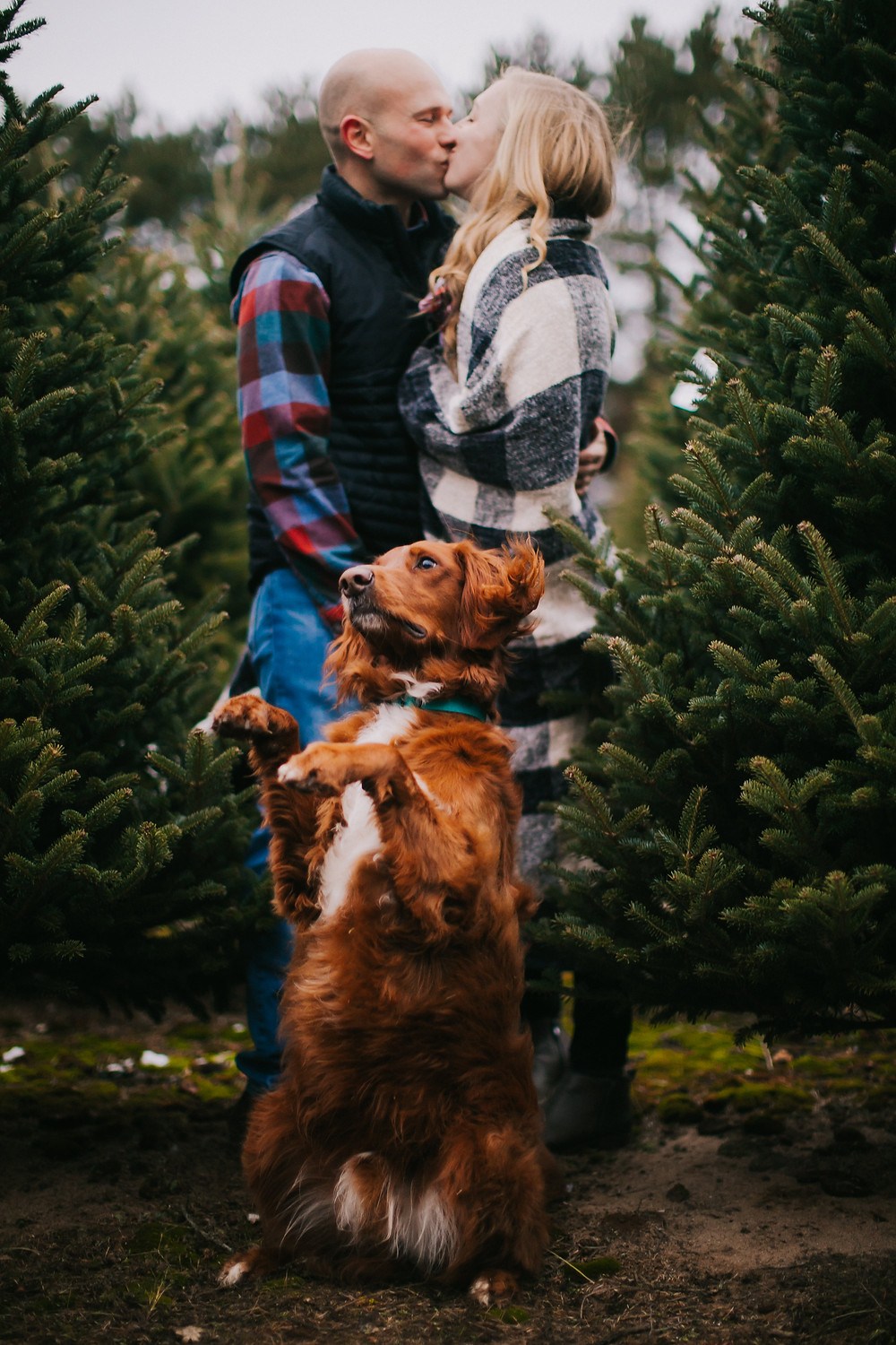 A dog sits posed for a photo with his owners during Wisconsin Christmas Photos