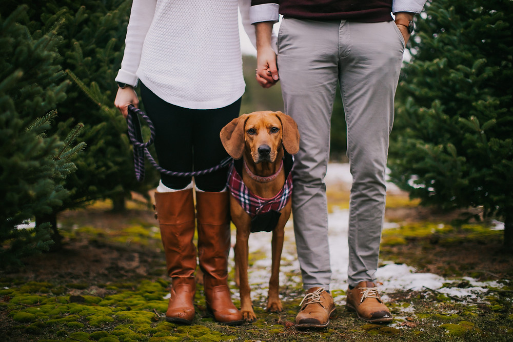 A dog sits between her owners legs at Hess Christmas Tree Farm