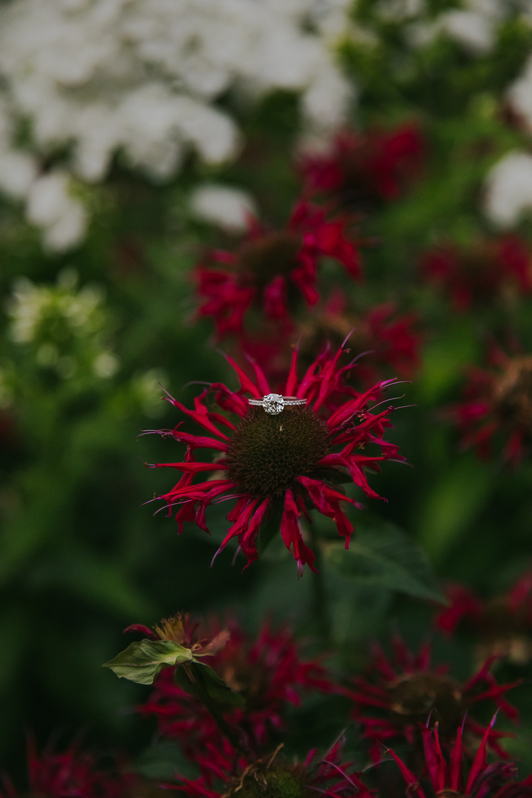A ring sits on a flower in a Madison garden