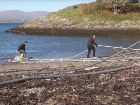 Deploying a new seaweed farm. Scottish Association for Marine Science. October 2016.
