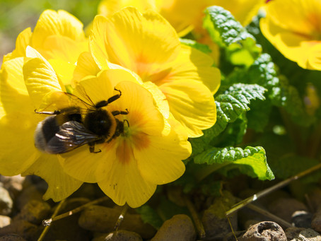 Spring has arrived!! Have you seen any bees yet?