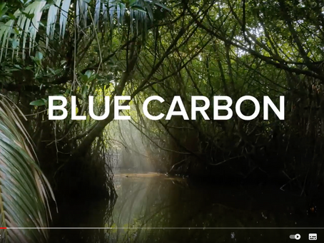 What on earth is Blue Carbon? Conservation International. July 2019
