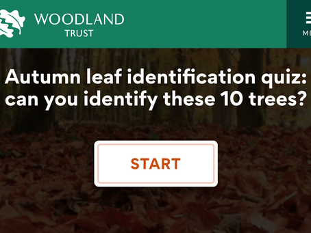 Autumn leaf identification quiz. Woodland Trust