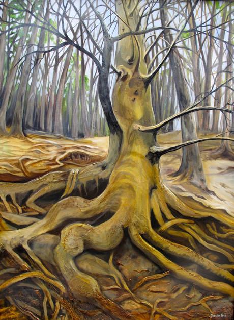 The Mother Tree, Cochrane