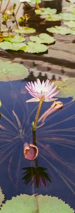 Flower Pond Edit.jpg