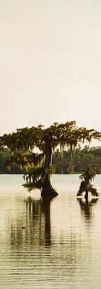 Swamp Tree 2 Edit.jpg