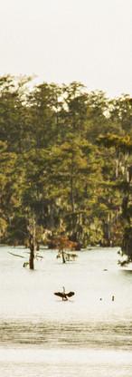 Swamp Bird Edit.jpg