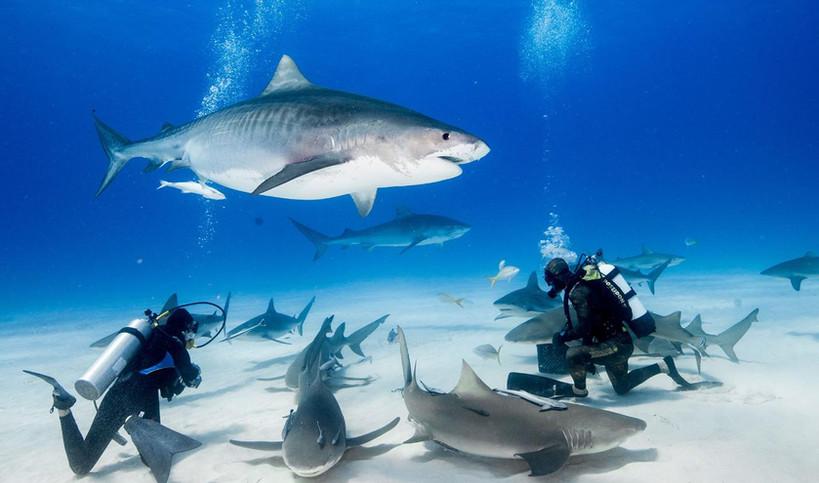Mexico Divers | Scuba Dive | Isla Mujeres, Mexico