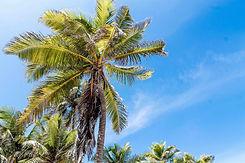 WingDiving55-TasteofIsla-Isla Mujeres-Ca