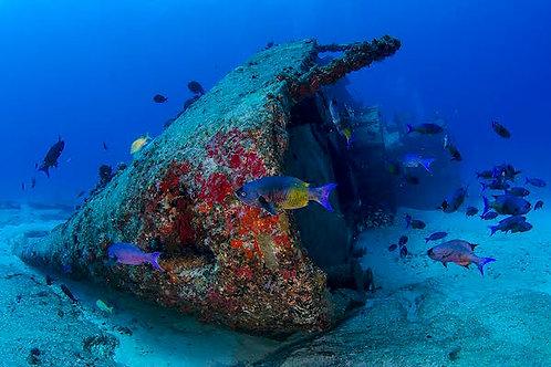 Adventure Diving - Mexico Divers