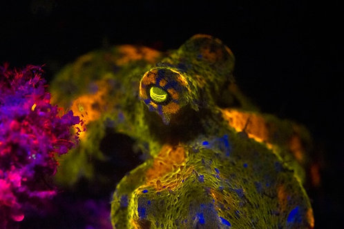 Fluorescent Night Diving - Mexico Divers
