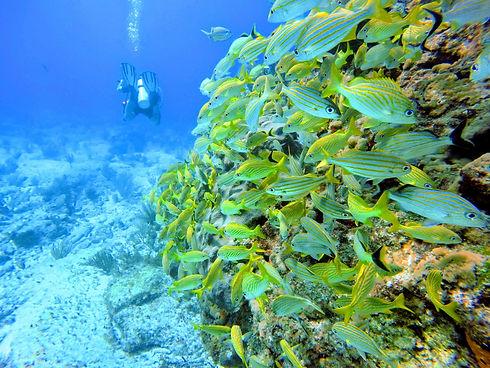 Diving1-IslaMujeres-Mexico-WingDiving-Va