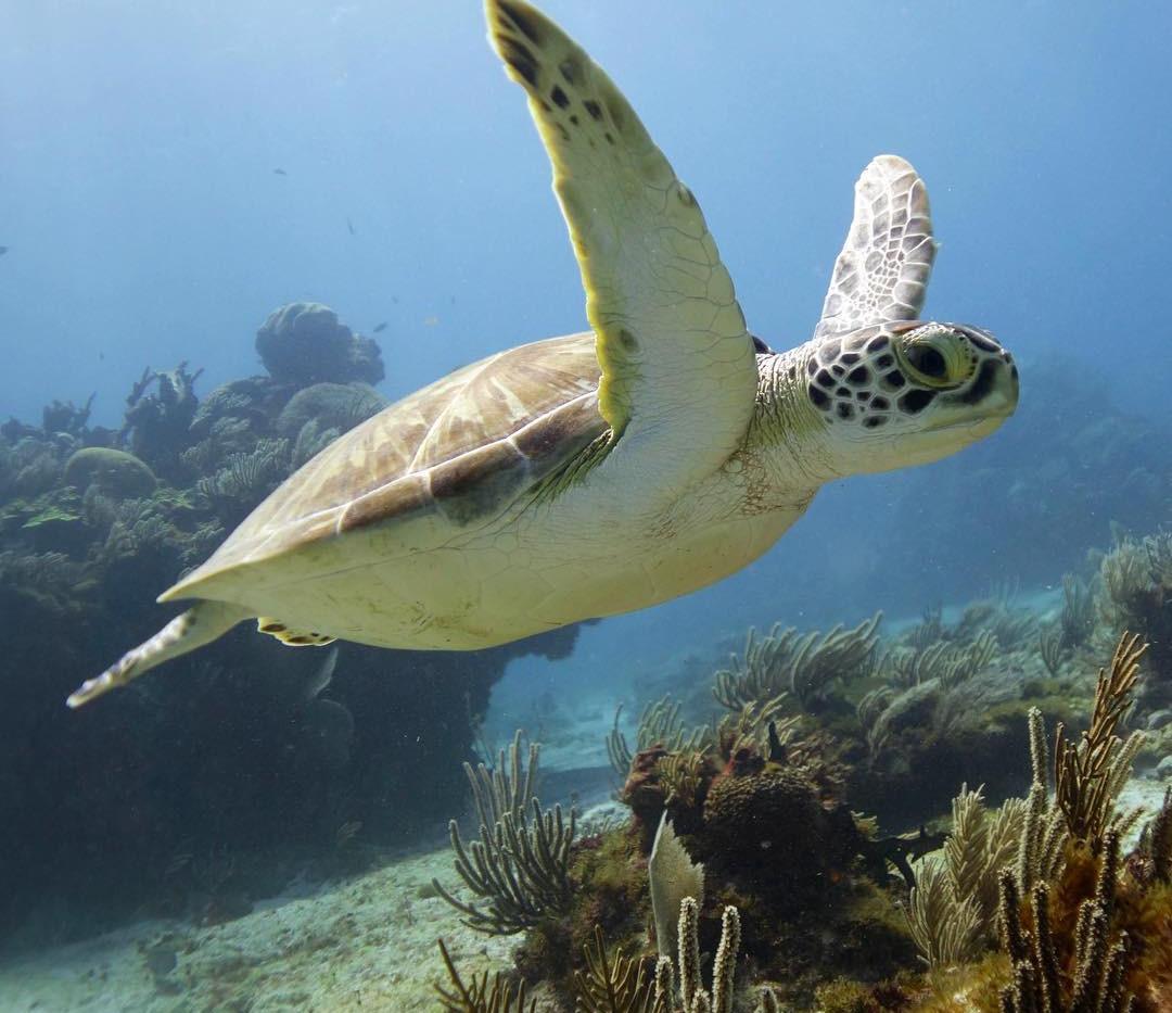Pocna Dive Center | Selina | Taste of Isla | Isla Mujeres, Mexico