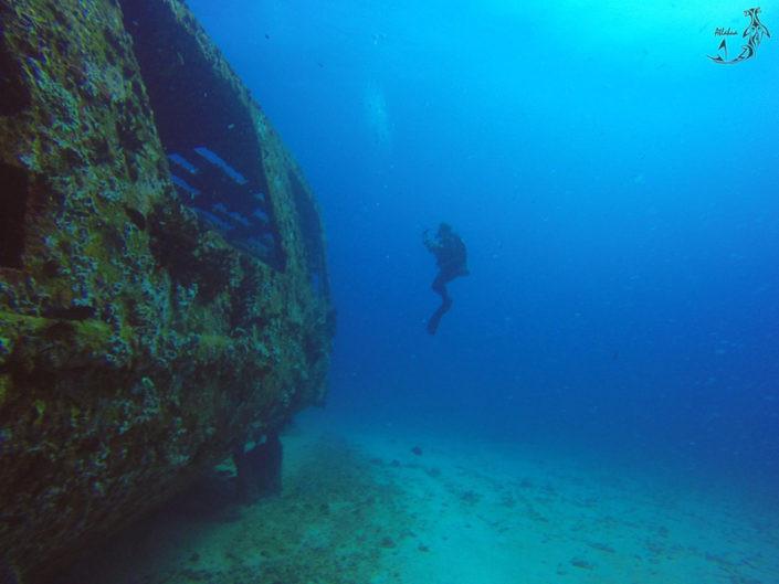 Sea Hawk Scuba Dive | Isla Mujeres, Mexico