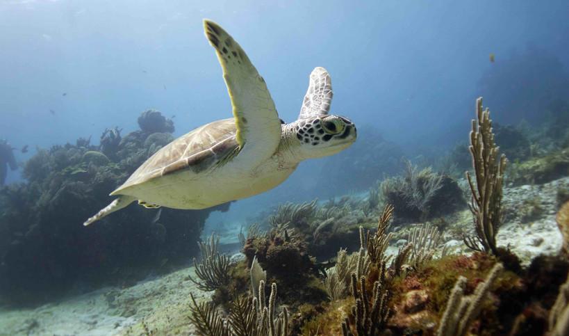 Pocna Dive Center | Isla Mujeres, Mexico