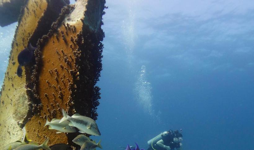 Pocna Dive Center   Selina   Taste of Isla   Isla Mujeres, Mexico