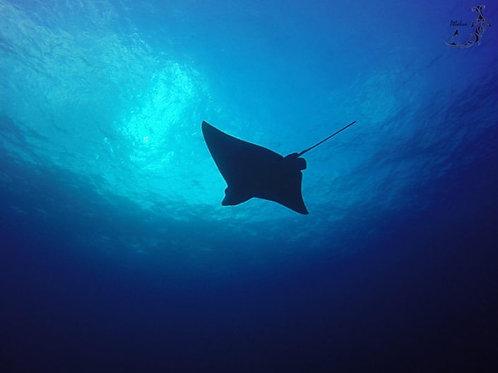 Night Dive - Sea Hawk Divers