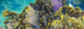 SeaHawksnorkel-TasteofIsla-Isla Mujeres-