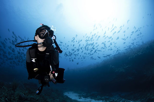 Private Reef Diving - Mexico Divers
