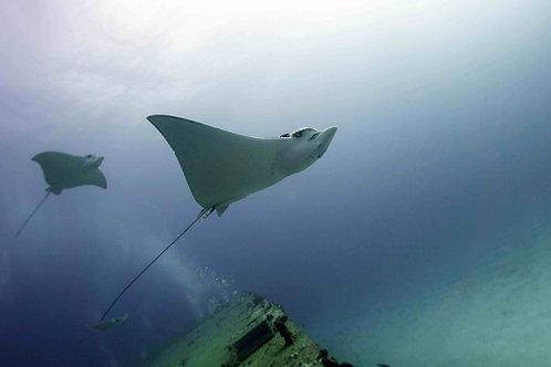 2 Tank Deep (Wreck) & Drift Dive - Pocna Dive Center