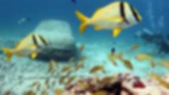 Snorkel 2PocnaDiveCenter-islamujeres-foo
