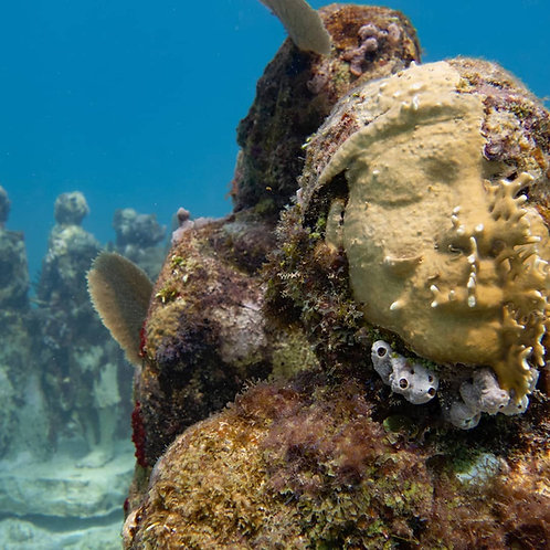 2 Tank MUSA & Reef Dive - Pocna Dive Center