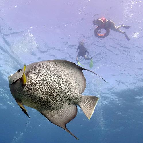Snorkel Tour - Pocna Dive Center
