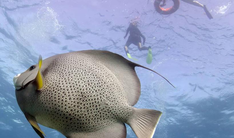 Snorkel 4PocnaDiveCenter-islamujeres-foo