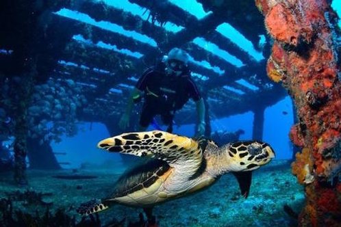 Private Adventure Diving - Mexico Divers