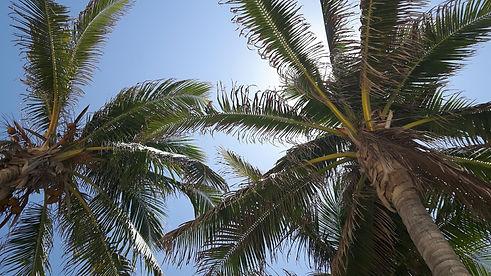 IslaMujeres1-Mexico-WingDiving-Vacation-