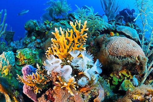Reef Diving - Mexico Divers