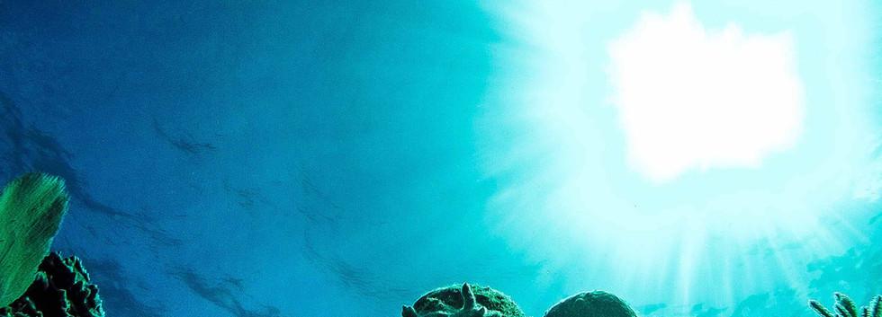 Taste of Isla | Isla Mujeres, Mexico