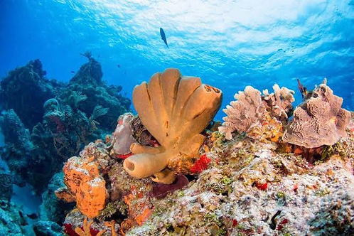 Cozumel Reef Diving - Mexico Divers