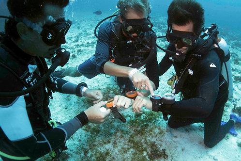 PADI Divemaster - Pocna Dive Center