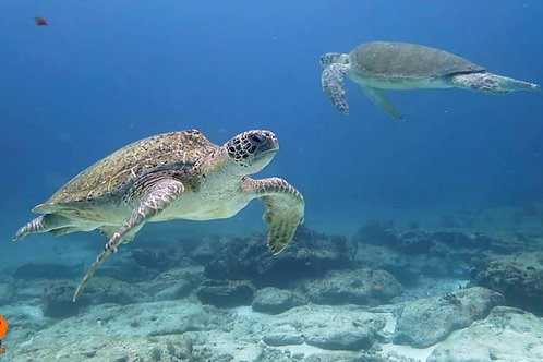 6 Tank Dive Packages - 2 Adventure Dive, 1 Reef Dive - Pocna Dive Center