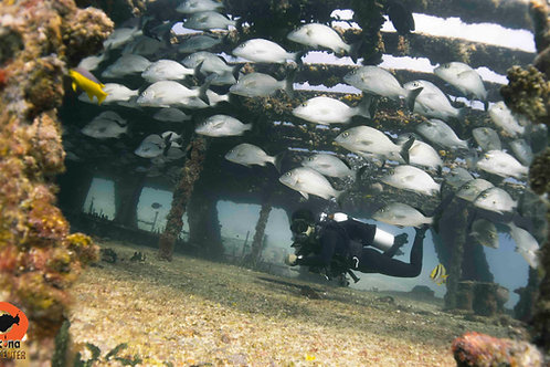 4 Tank Adventure Dive Packages - 2 Adventure Tours  - Pocna Dive Center