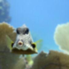 Snorkel 6PocnaDiveCenter-islamujeres-foo