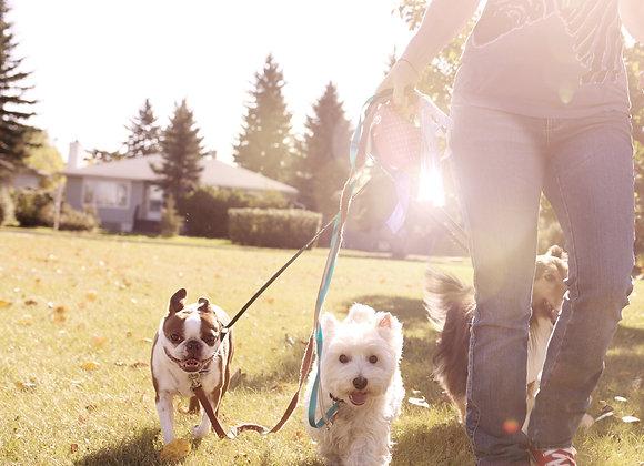 Hike, puppies and sunshine