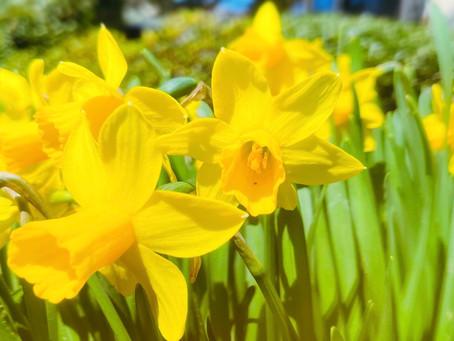 リベンジ!「春の音楽会」