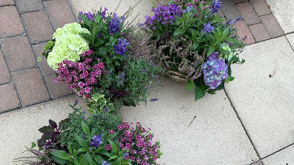 Multi Green/Purple - Planted Baskets