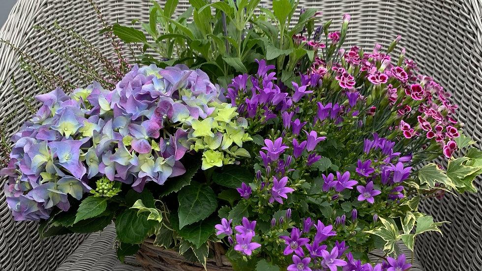 Purple & Green - Planted Basket