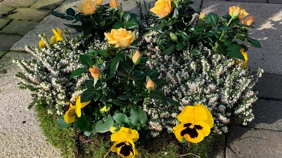 Green & Yellow - Planted Basket