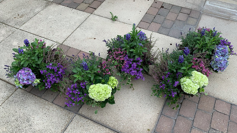 Multi Green/Shades of Purple - Planted Baskets