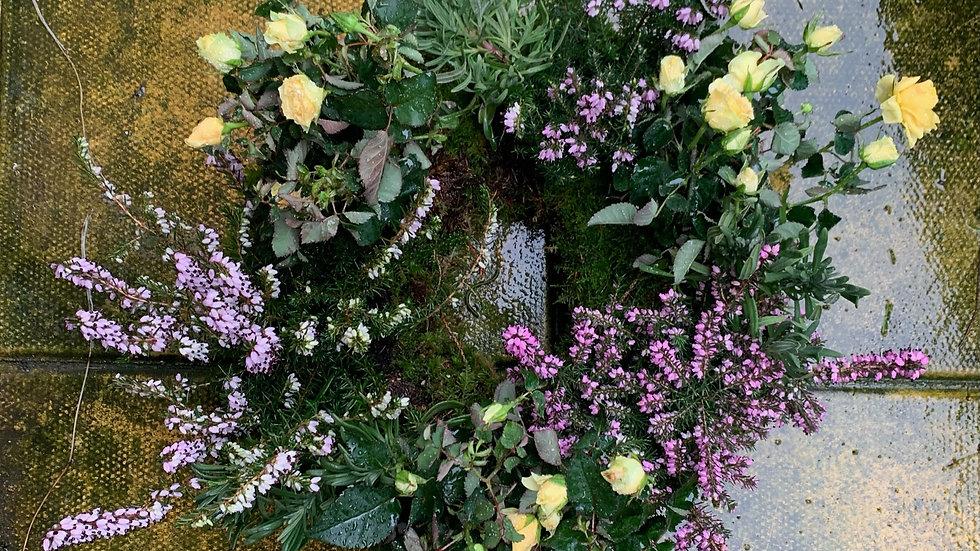 Yellow & Purple - Planted Basket
