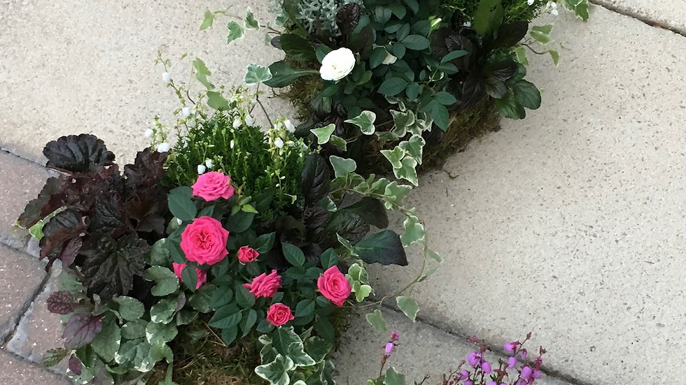 Multi Green/Pink - Planted Baskets