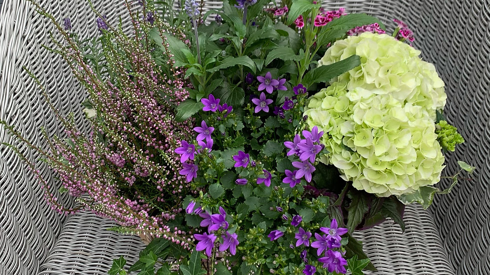 Shades of Green/Purple - Planted Basket