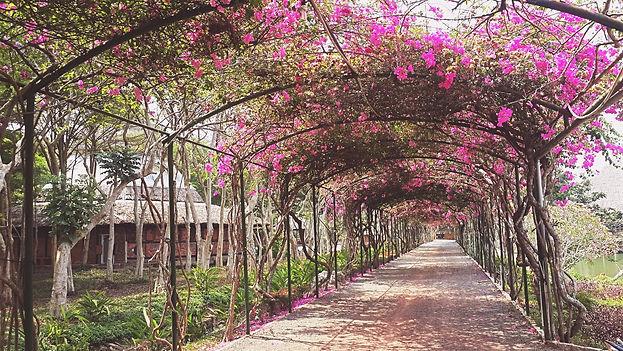 beautiful walkway flowers